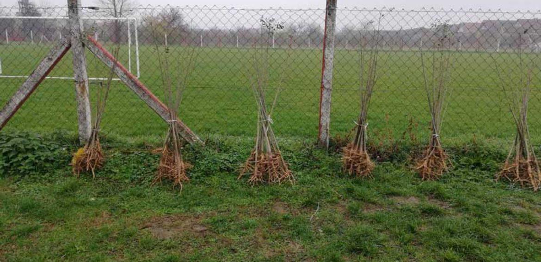 Нове саднице за нашу школу